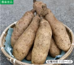 長泉大和芋