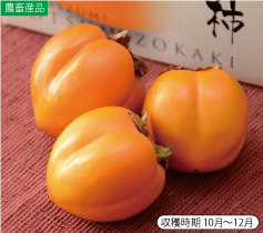 長泉四ツ溝柿